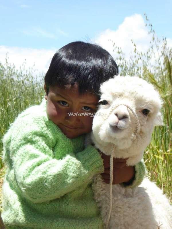 alpaca and child