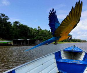 current parrot boat tropical adventure